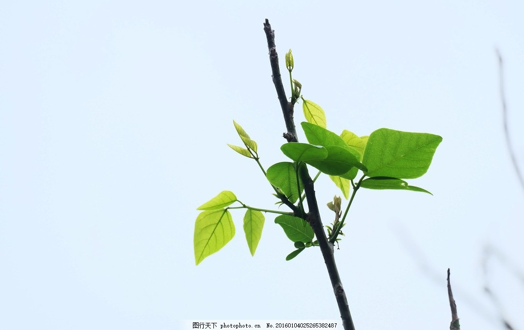 树枝叶子图片