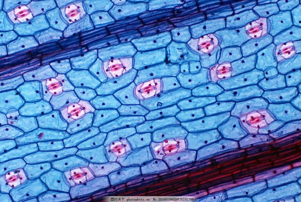 细胞图片 细胞 植物细胞 细胞壁 生物世界 其他生物 共享图 设计 现代