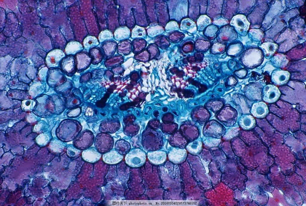 动物细胞图片手绘图