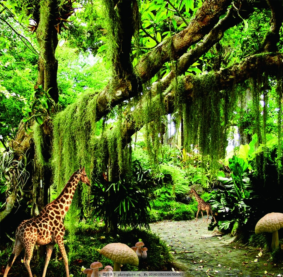 阳光树林 树林黄昏 森林阳光 森林黄昏 树林背景 树林小路 林荫道