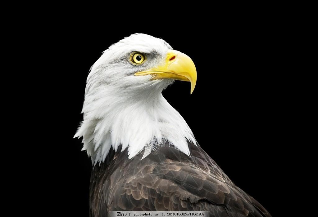 唯美老鹰 炫酷 动物 生物 可爱 野生 摄影