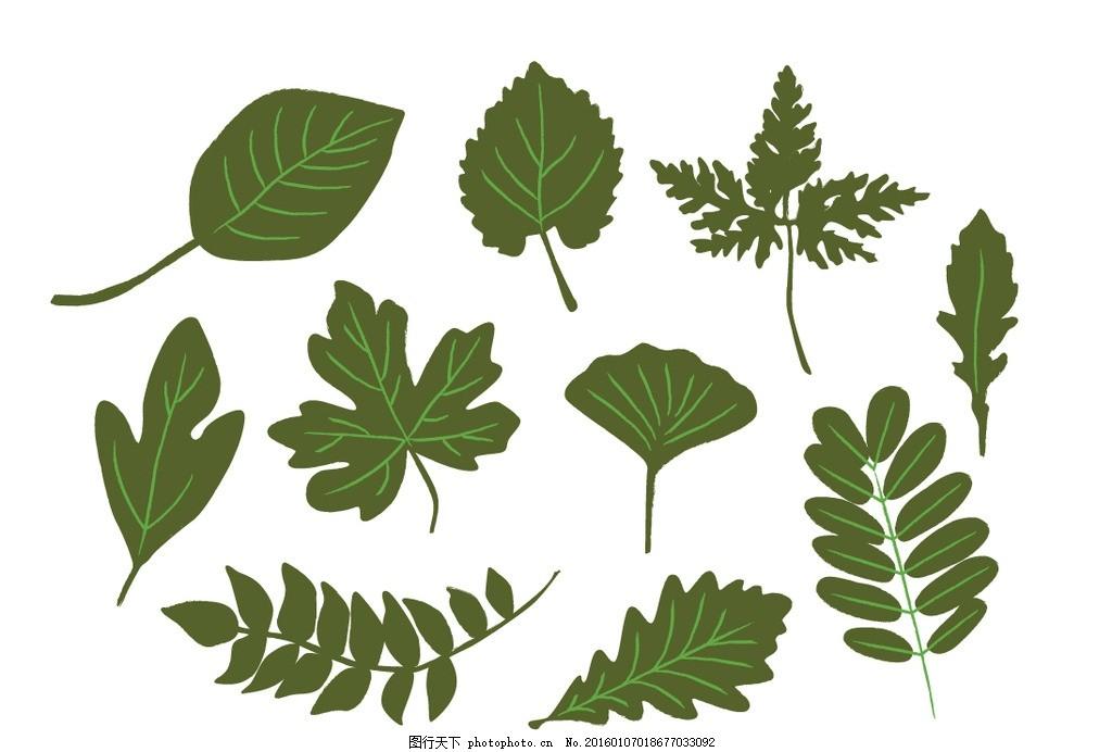 多种绿色叶子 多种 绿色 叶子枫叶 榆树叶 杨树叶 梧桐树叶 树叶 槐树