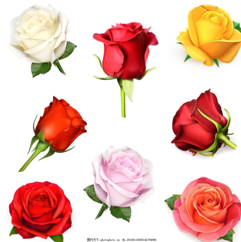 玫瑰 装饰 插画 卡片 背景 海报 画册 矢量植物 设计 生物世界 花草