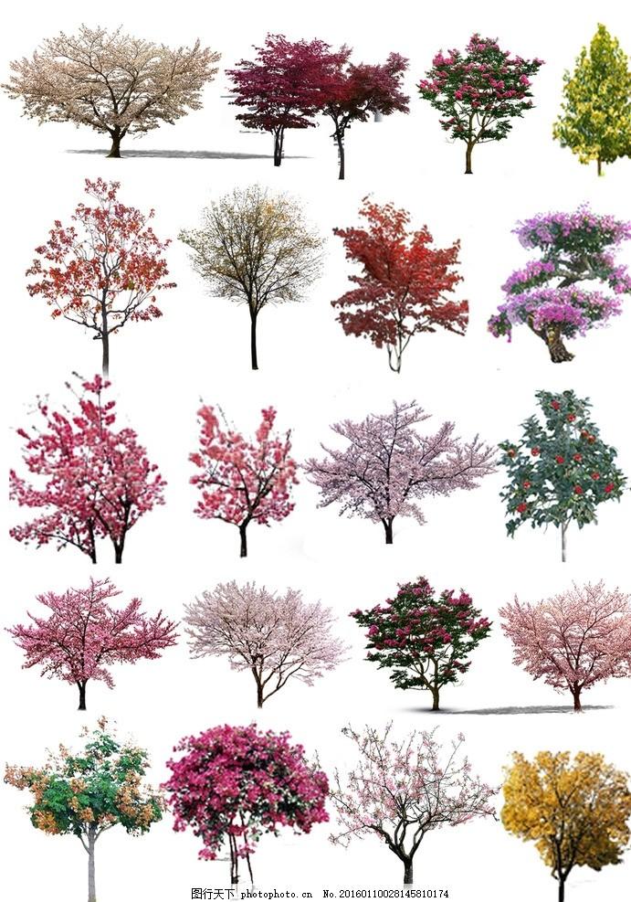素材 树 单个 景观 效果图