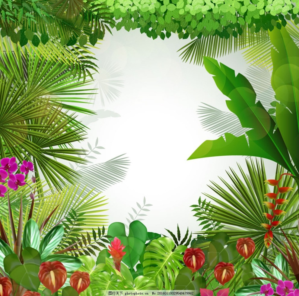 热带植物背景 热带雨林 红掌 蝴蝶兰 龟背竹 芭蕉 矢量图