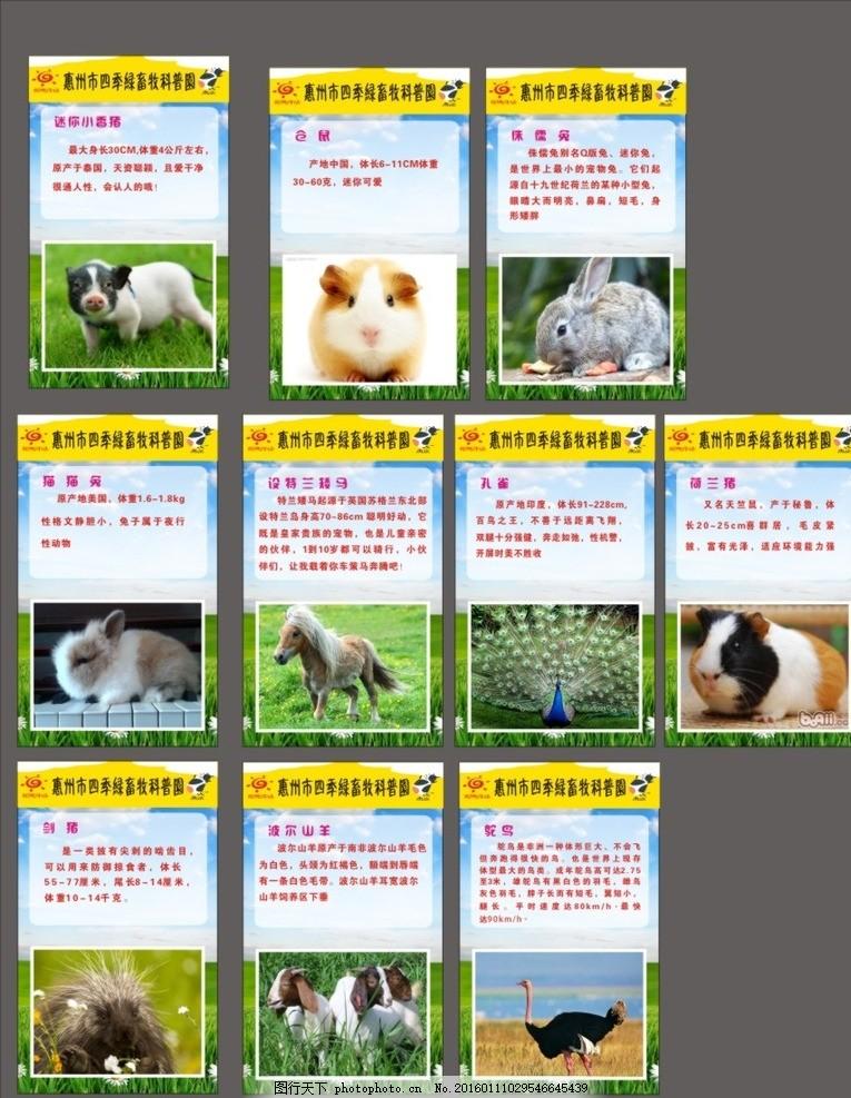 动物简介 动物园展板 可爱的小动物 迷你小动物 小香猪 仓鼠 侏儒兔