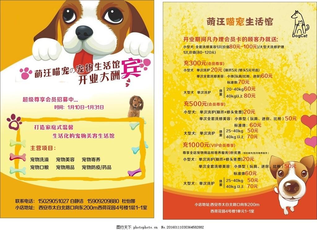 宠物彩页 彩页 宠物 黄色背景 狗狗 宣传单 设计 广告设计 dm宣传单