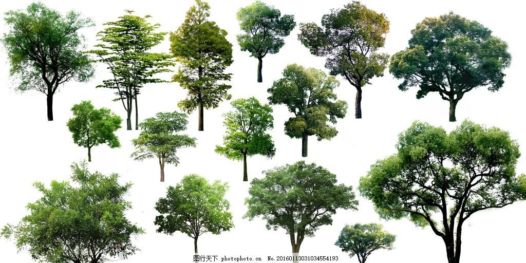 环艺 树 杨树 柳树 松树 景观树 大树 设计 广告设计 其他 100dpi psd