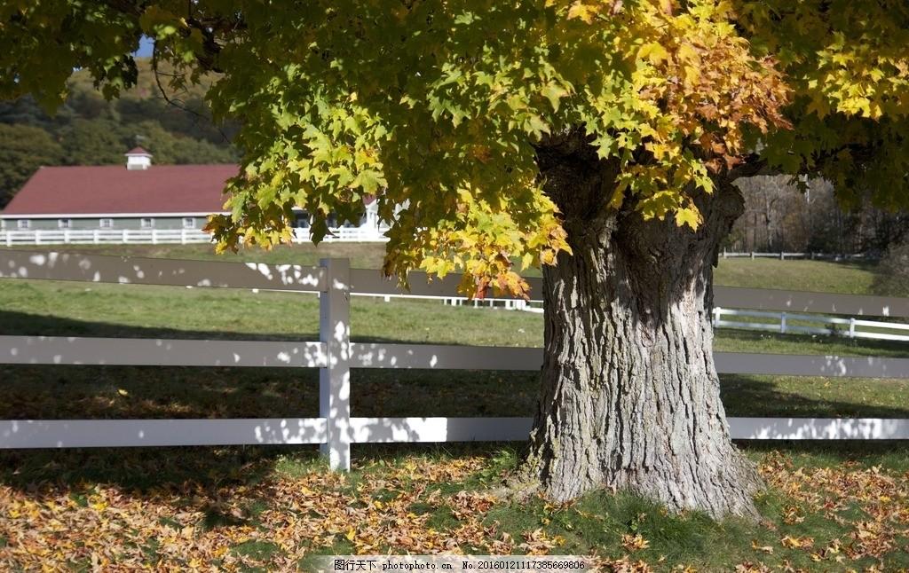 树 大树 草坪 公园 房子 山水风景 摄影 自然景观 自然风景 72dpi jpg