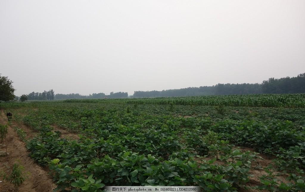 土路 农家院 树木 天空 民房 田地 摄影 自然景观 田园风光 350dpi