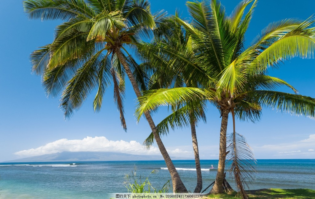 秦皇岛大海 唯美 风景 风光 旅行 自然 蓝天 白云 大海 海 海景 椰子
