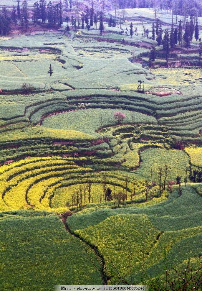 农作物 农业 罗平 罗平风光 观光农业 云南风光 鲜花 风景照片 摄影