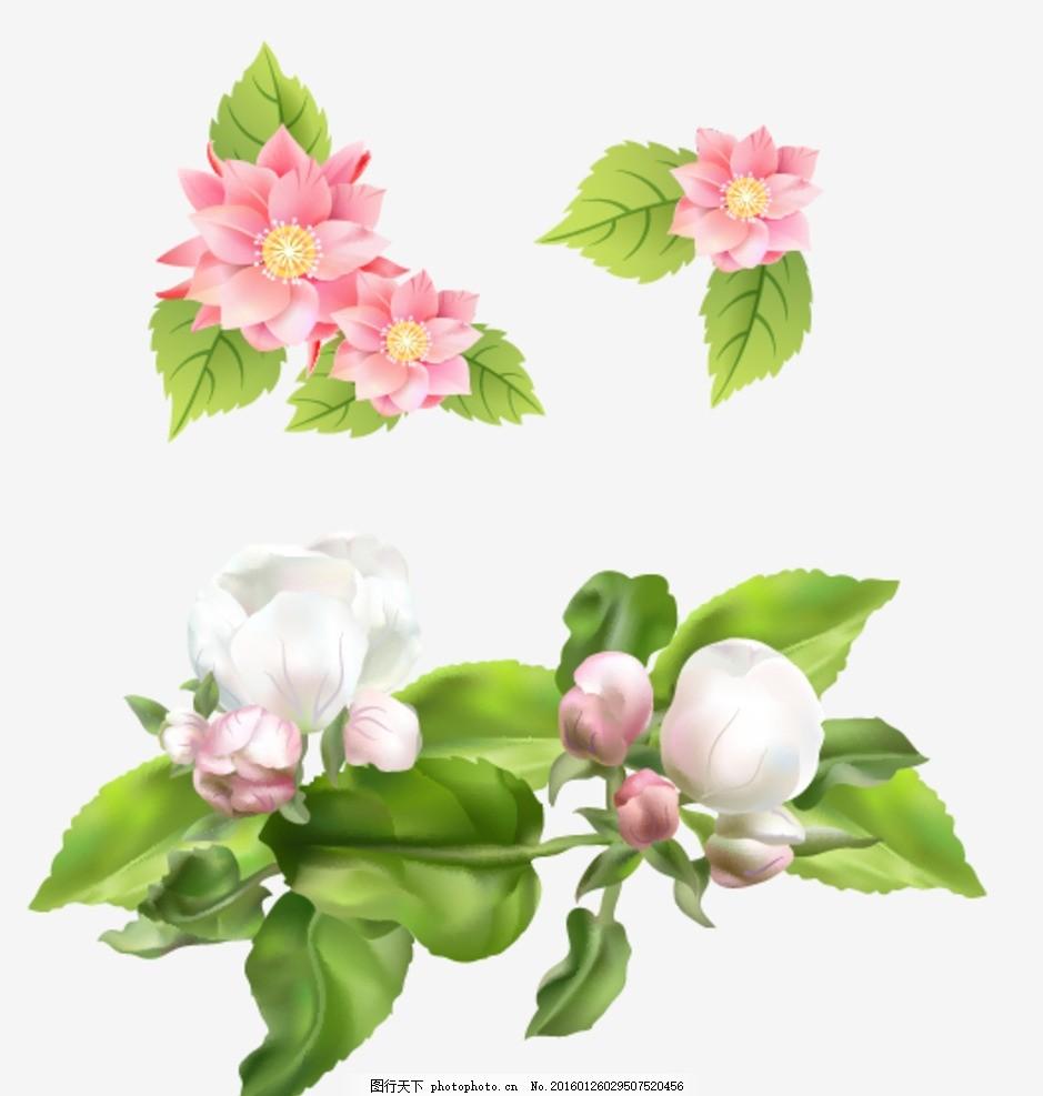 海棠花 花朵 花卉 手绘花朵素材 矢量花朵 矢量素材 各种花朵