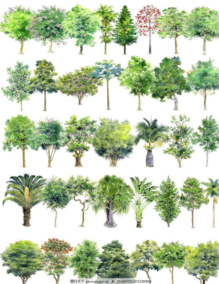 植物ps素材 园林 景观 效果图 建筑 室外 风景