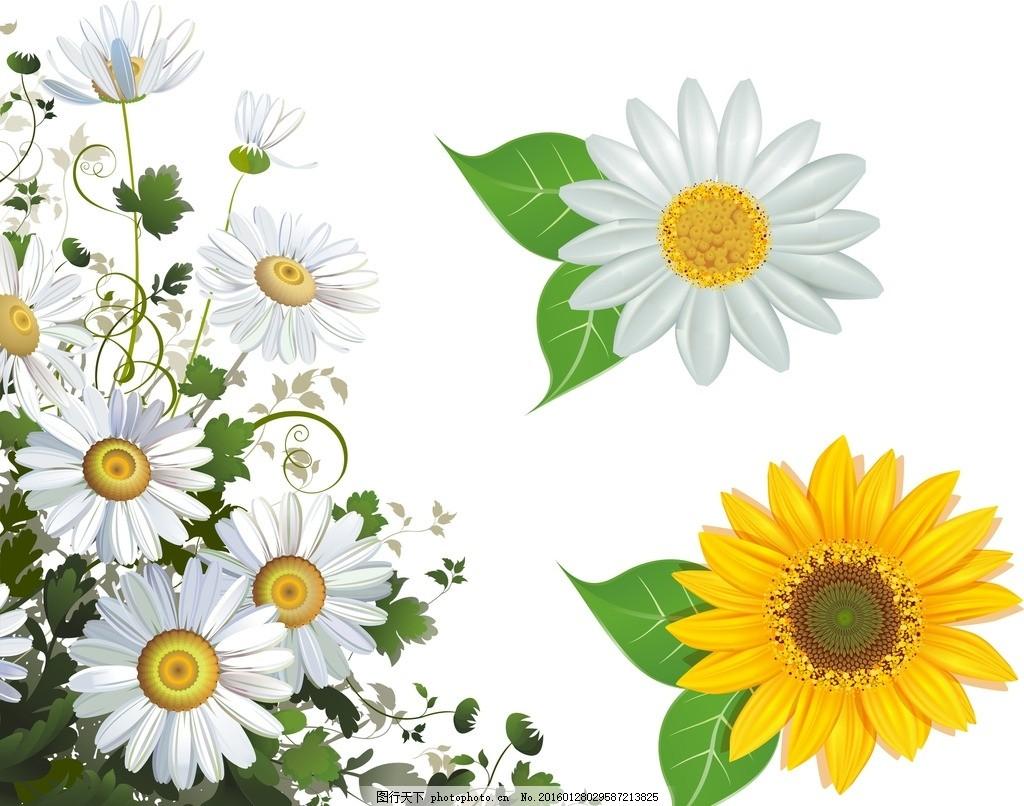 菊花 洋菊 小绉菊 白色花朵 黄色花朵 向日葵 矢量向日葵 太阳花 设计