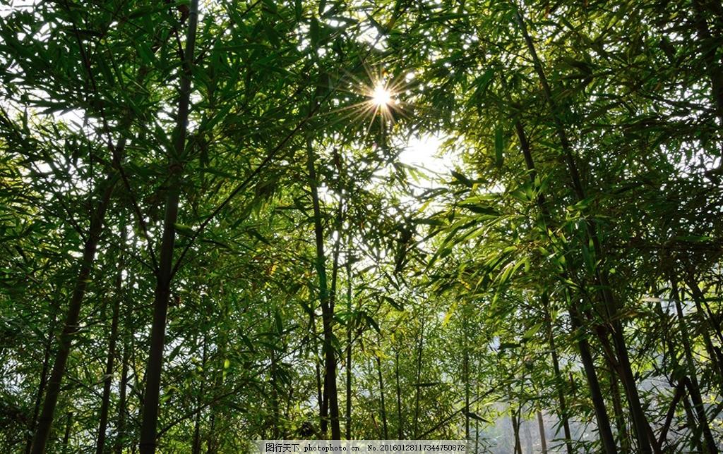 竹子 竹林 山间竹林 竹林中的阳光 树林 摄影 摄影 自然景观 自然风景