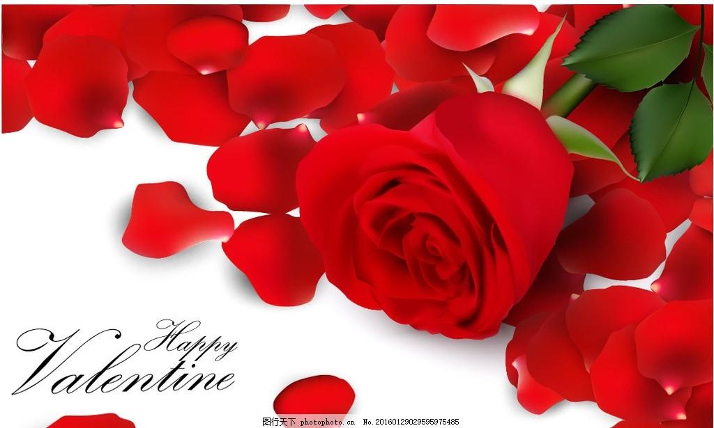 心形玫瑰花瓣 玫瑰花瓣 红色玫瑰花瓣 玫瑰花 红玫瑰 情人节 花瓣图片