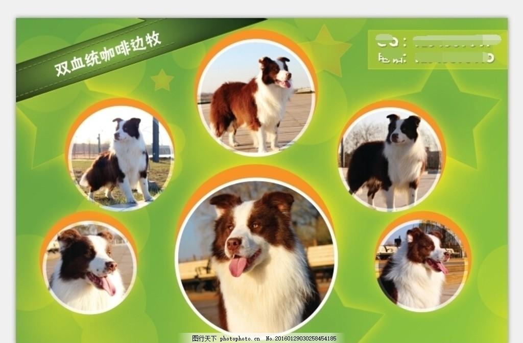 动物画册排版 图片排版 绿色背景 背景模板 狗狗 展板 展板 模板类