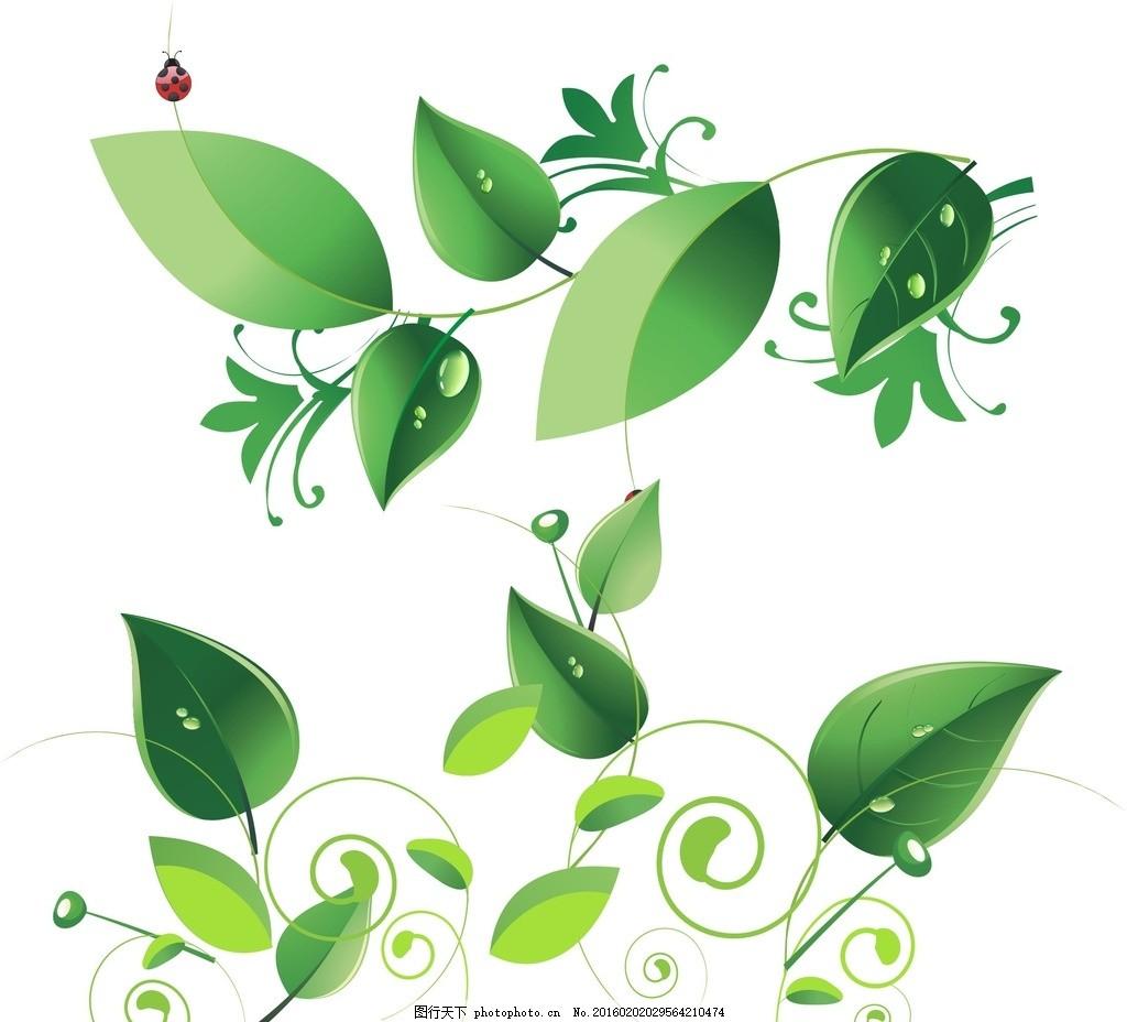 插画 手绘插画 树叶 矢量树叶素材 矢量树叶 绿色树叶 树叶素材 树藤