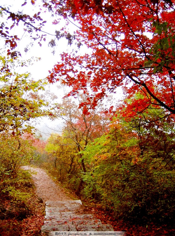 妙峰山 秋意 红叶 山间 小路 摄影 旅游摄影 国内旅游 180dpi jpg