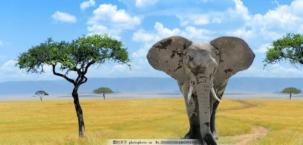 炫酷大象 唯美 炫酷 大象 动物 生物 可爱 摄影 生物世界 野生动物 72