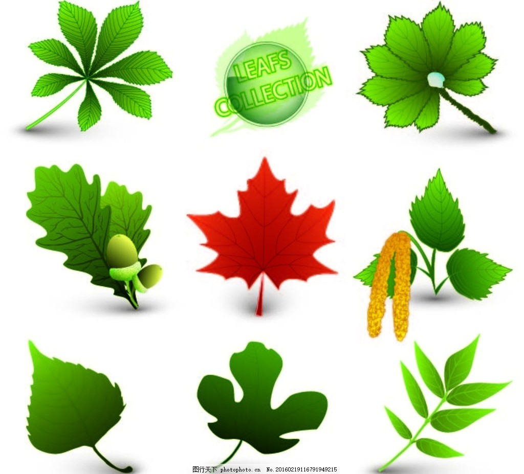 绿色植物 绿色 植物 叶子 绿叶 枫叶 设计 psd分层素材 风景 eps
