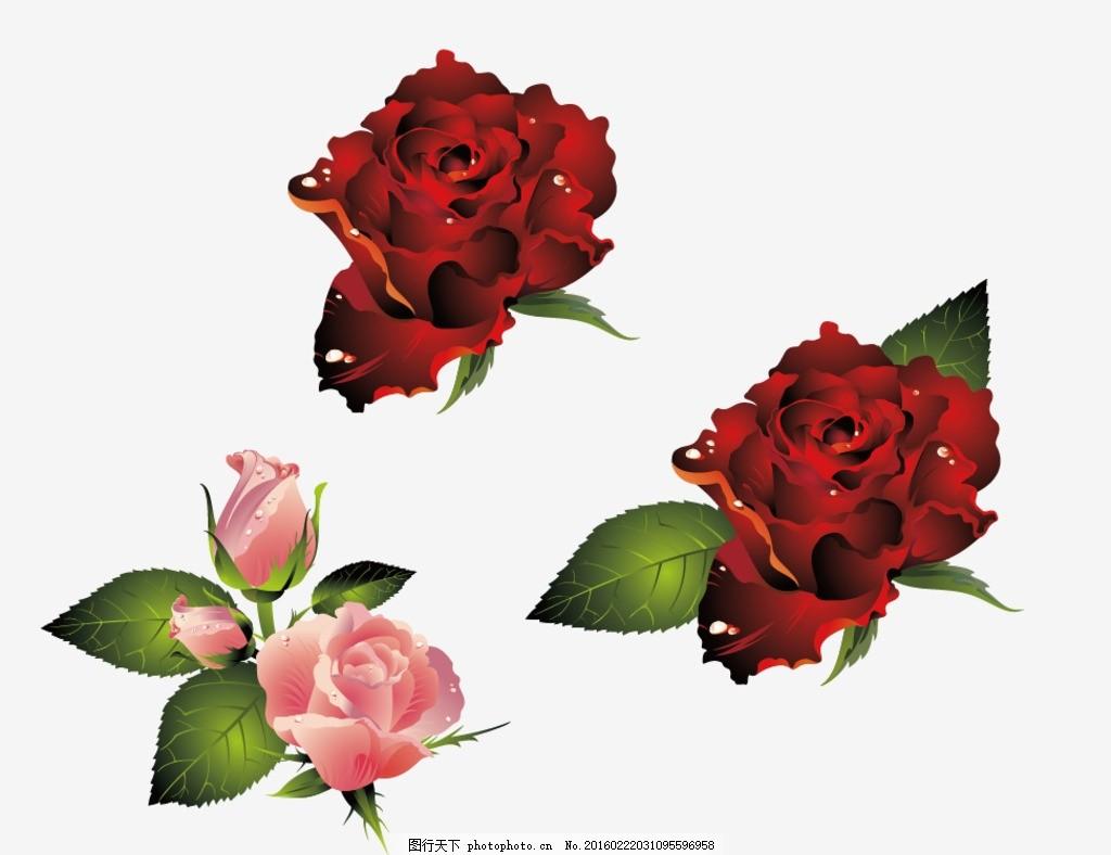 爱情 浪漫 玫瑰 红玫瑰 红玫瑰花 大红玫瑰 花 花朵 花卉 鲜花 一支