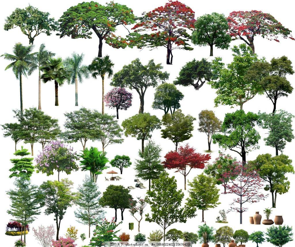 各种各样的树木