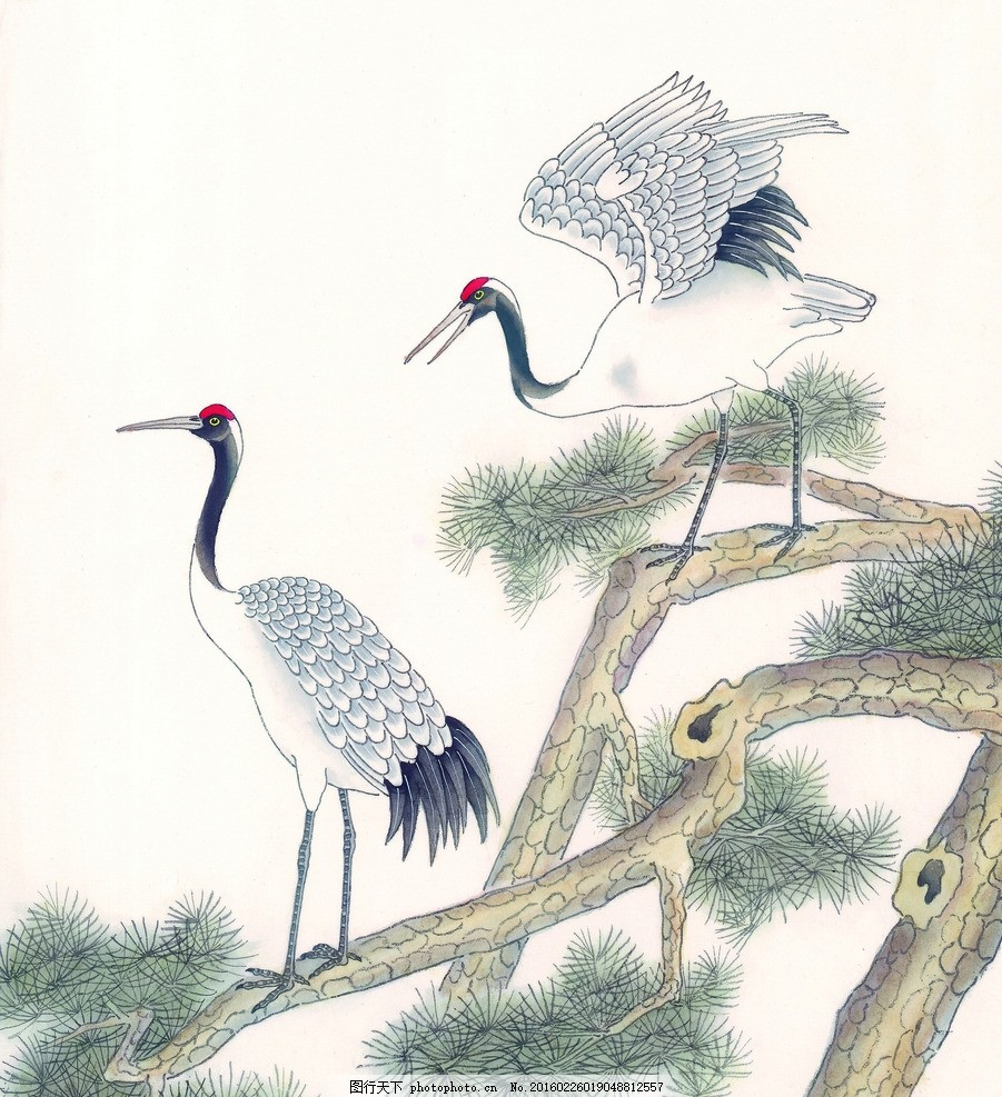 丹顶鹤 鸟类 小鸟 可爱 栖息 高清鸟类 鸟类素材 手绘