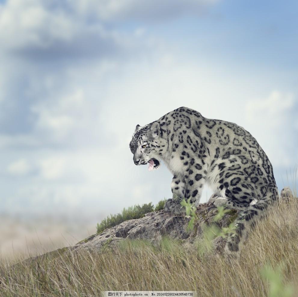 炫酷花豹 唯美 炫酷 可爱 动物 野生 凶猛 豹子 花豹 摄影 生物世界