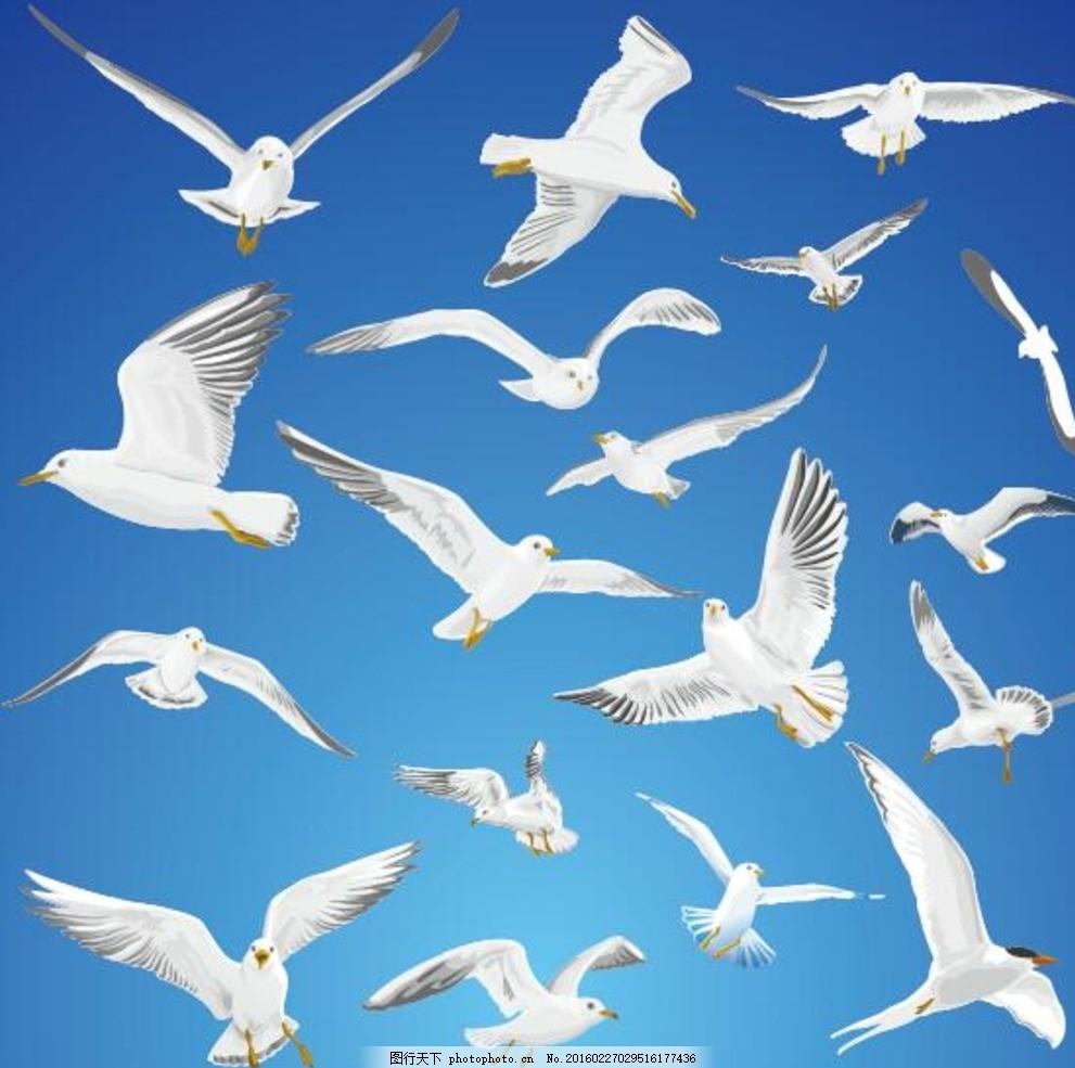 海鸥 海洋 白色 飞翔 展翅 海报 矢量 素材 设计 广告设计 广告设计