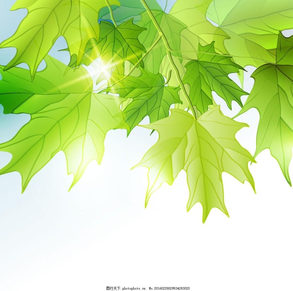手绘叶子 飘叶 绿色背景 黄叶子 黄叶 清新 春色 小清新 春天 春季图片