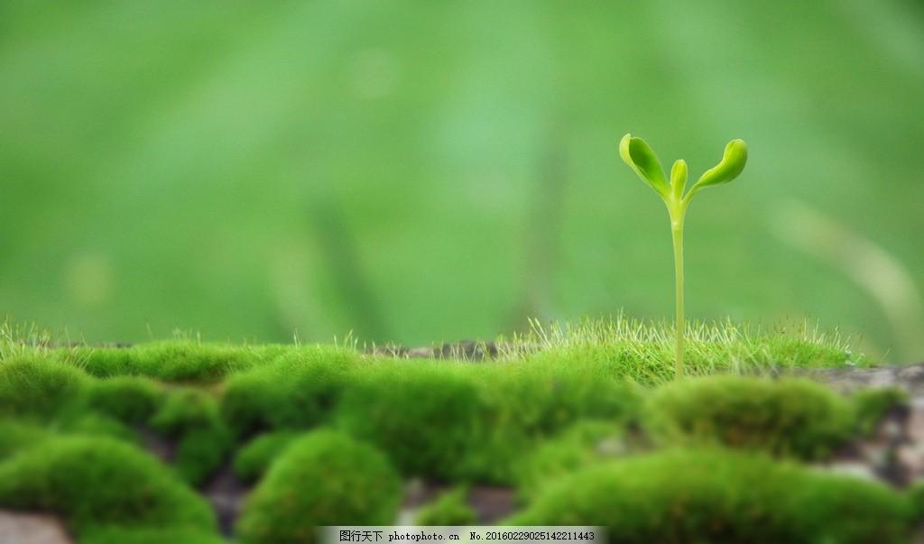 向日葵 桌面壁纸 小清新 植物 护眼 绿色 摄影