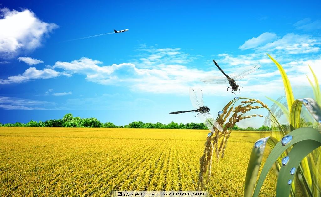 水获的季节 秋天 稻穗 谷子 绿色 丰收 自然风景 自然景观 水稻收割