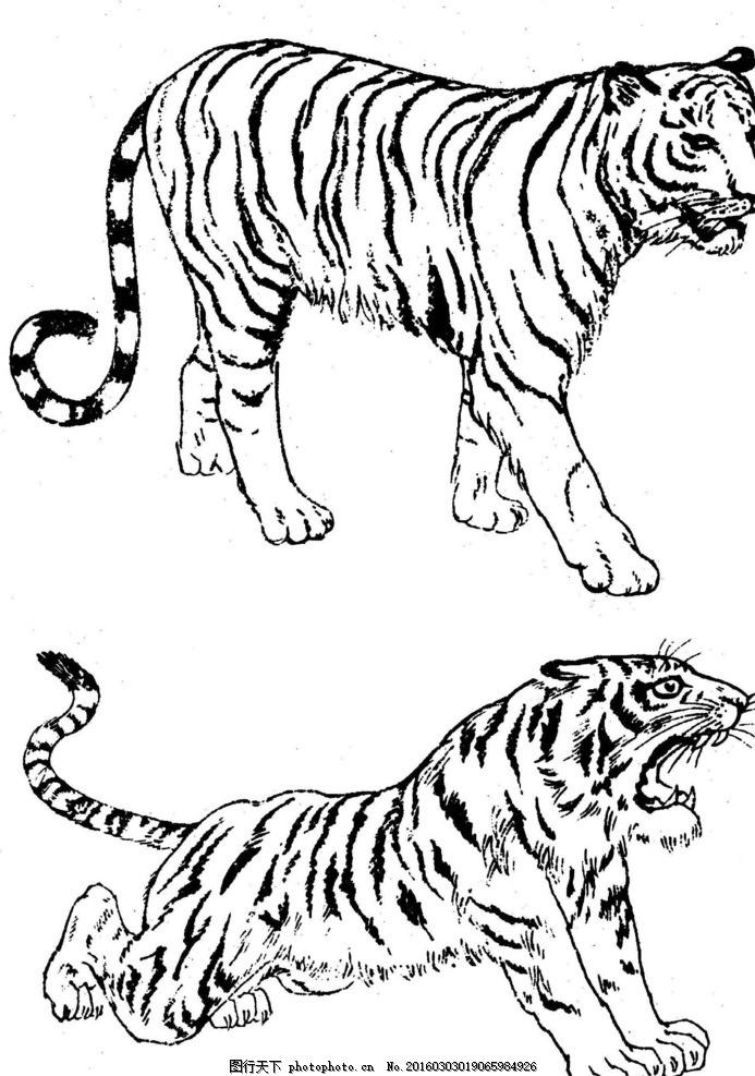 白描老虎 虎 白描虎 老虎 猛虎 野兽 猛兽 动物 中国画 水墨画 线描