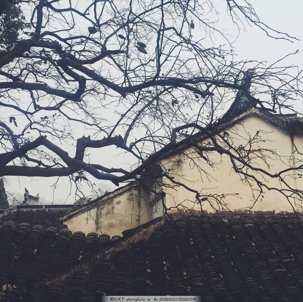 冬日苏州园林树枝 苏州园林 苏州 枯树 树枝 风景 江南 摄影 建筑园林