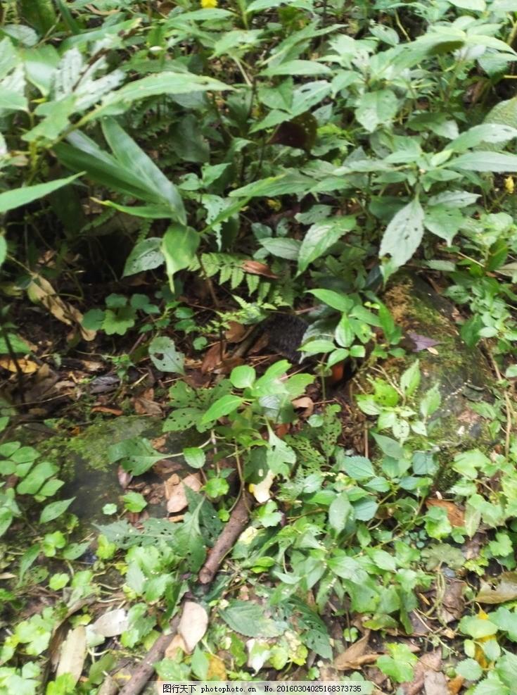 杂草 草丛 小草 植物 绿色风景 绿植 树枝 石头 自然风景 大自然