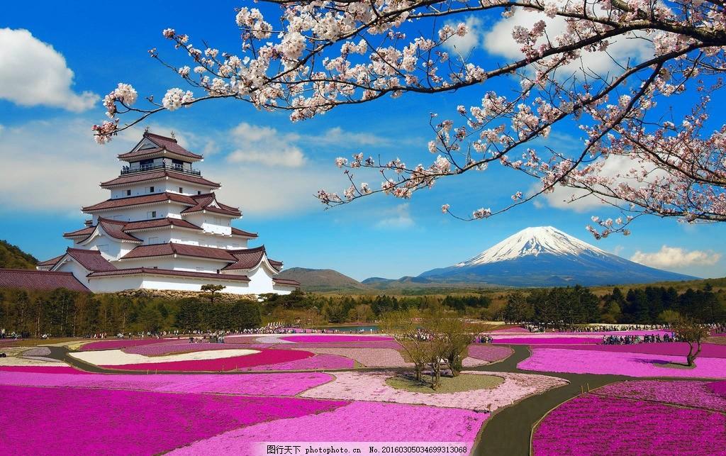 富士山 樱花 日本 风景 春天 蓝天白云 著名景点 图片素材 摄影
