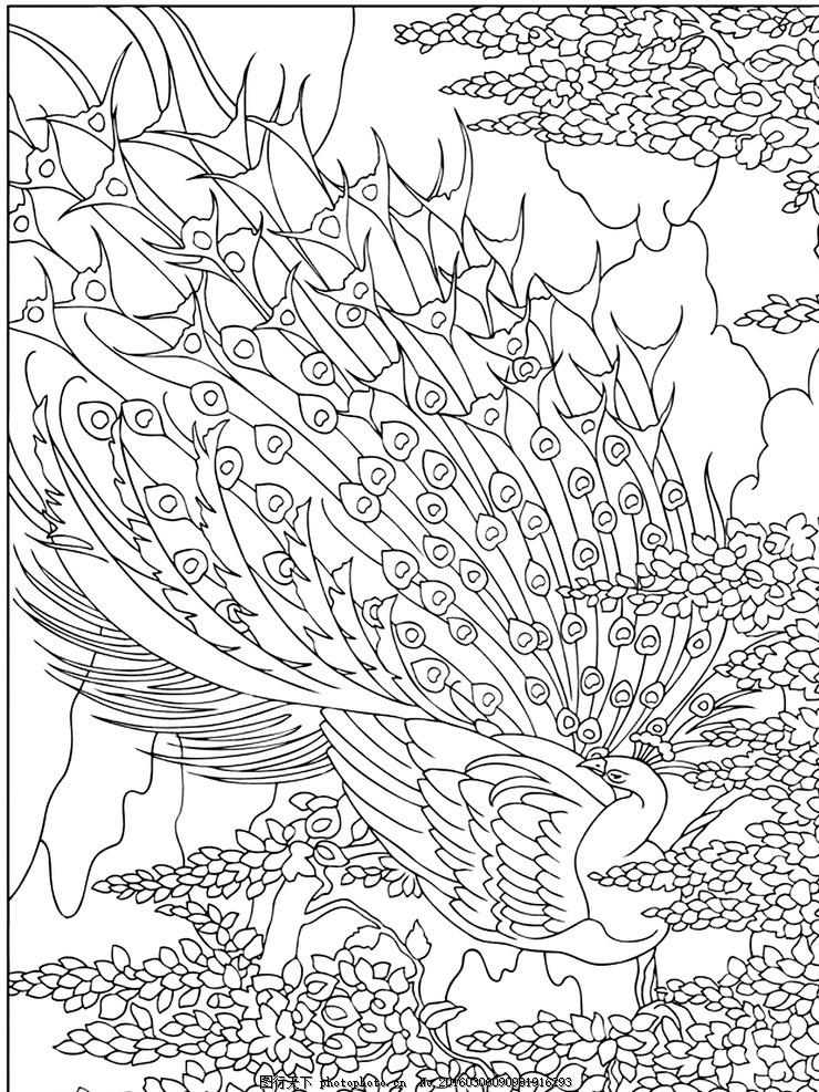 秘密花园 填色卡 填色卡孔雀 简笔画 小学生 绘画 文化艺术 绘画书法