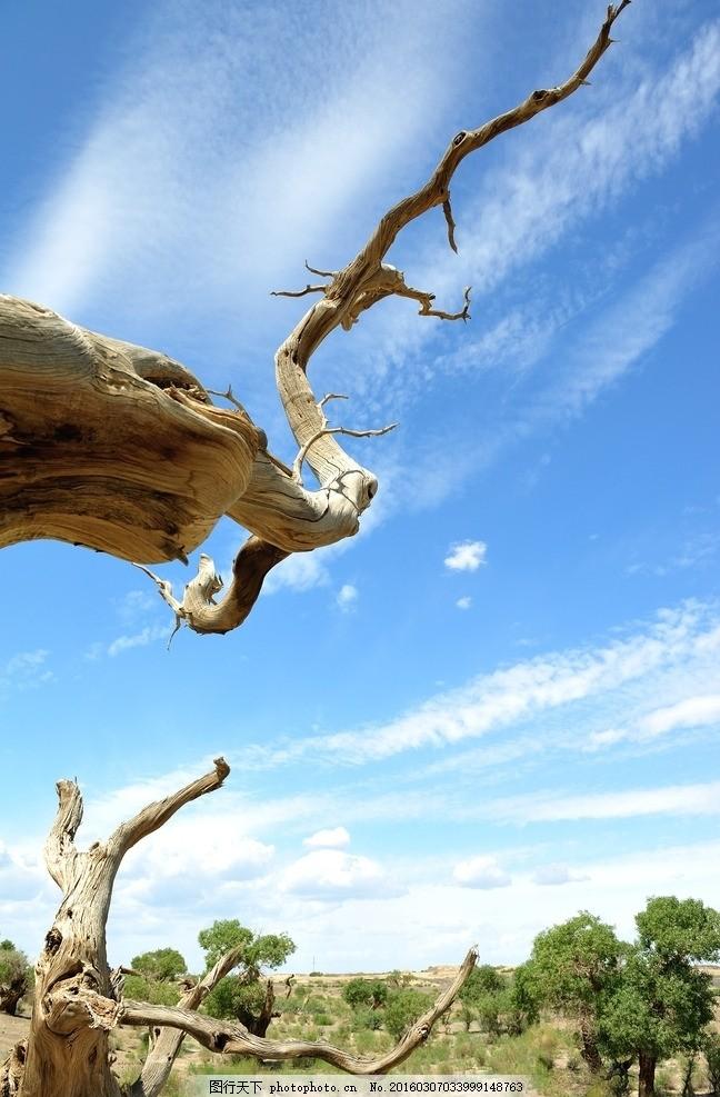 枯树 枯木 荒漠 唯美 炫酷 风景 风光 旅行 自然 新疆 新疆之旅 摄影
