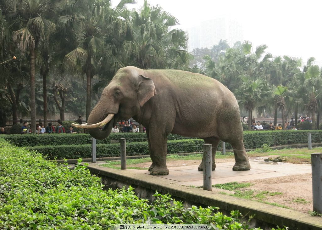 动物园大象