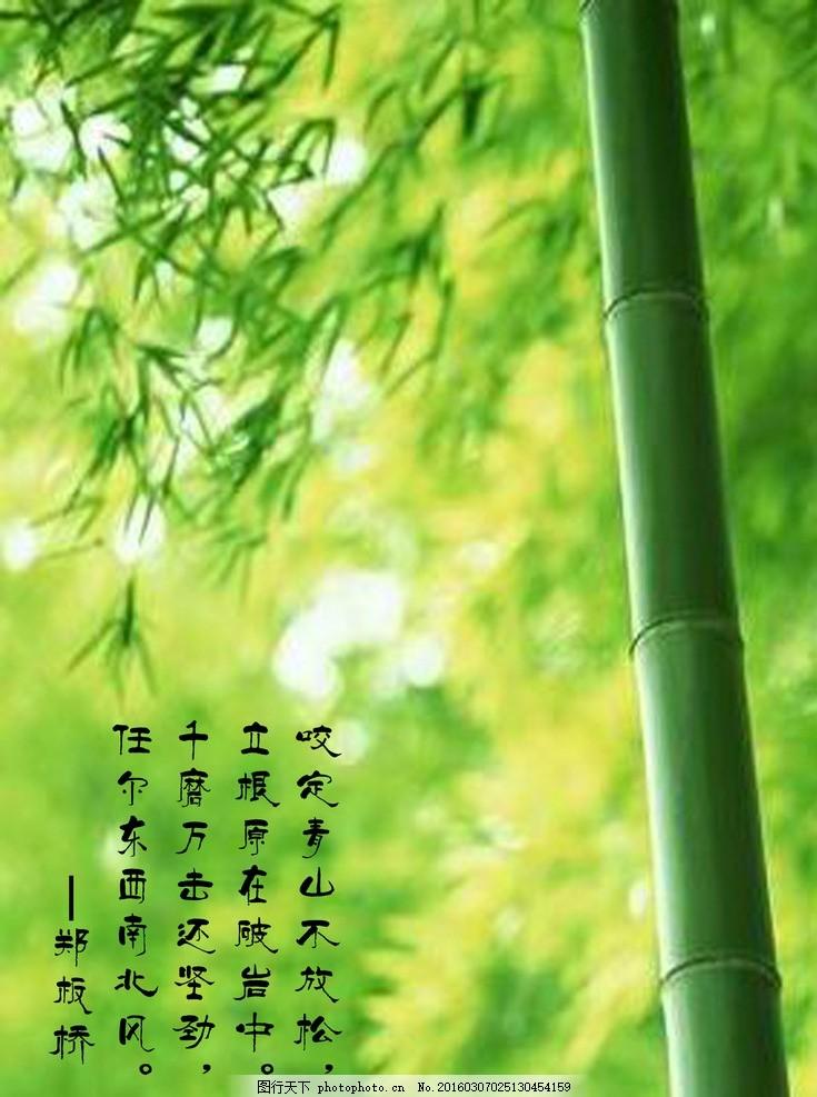 风景竹子图片大全大图