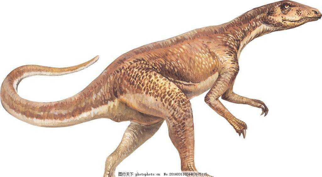 恐龙 兽脚亚目 蜥臀目 艾雷拉龙科 设计 生物世界 野生动物 恐龙 设计