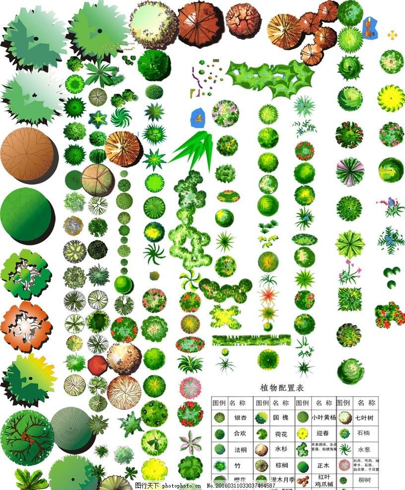 平面植物 景观素材 树