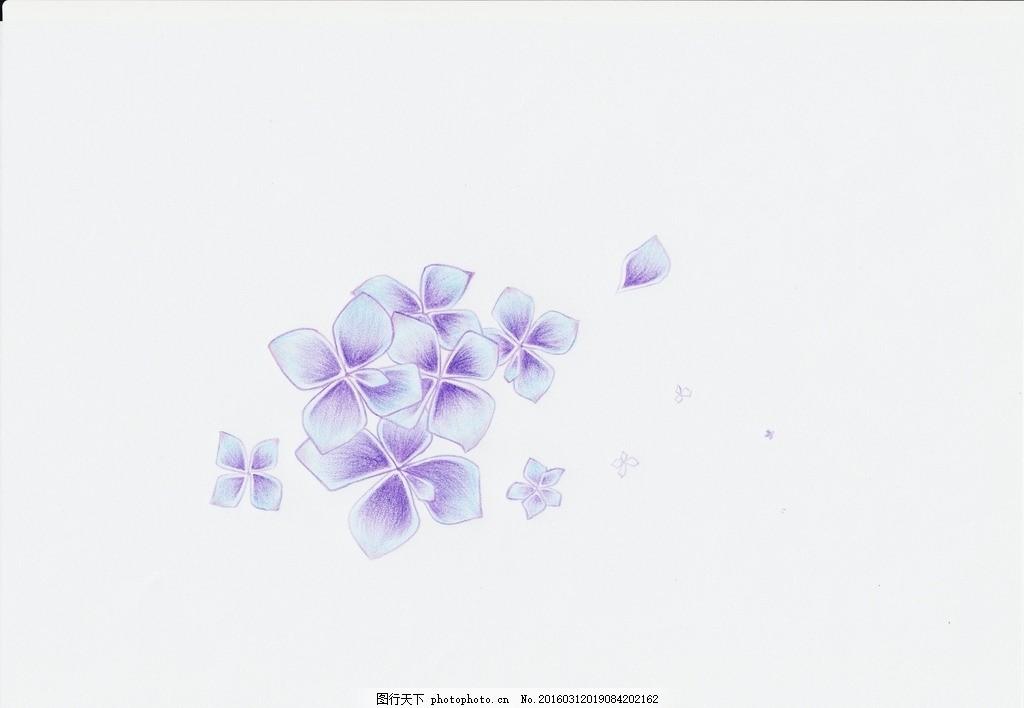手绘紫阳花 梦幻 紫阳花 彩铅 画画 手绘 绣球花 小花 少女 手绘 设计