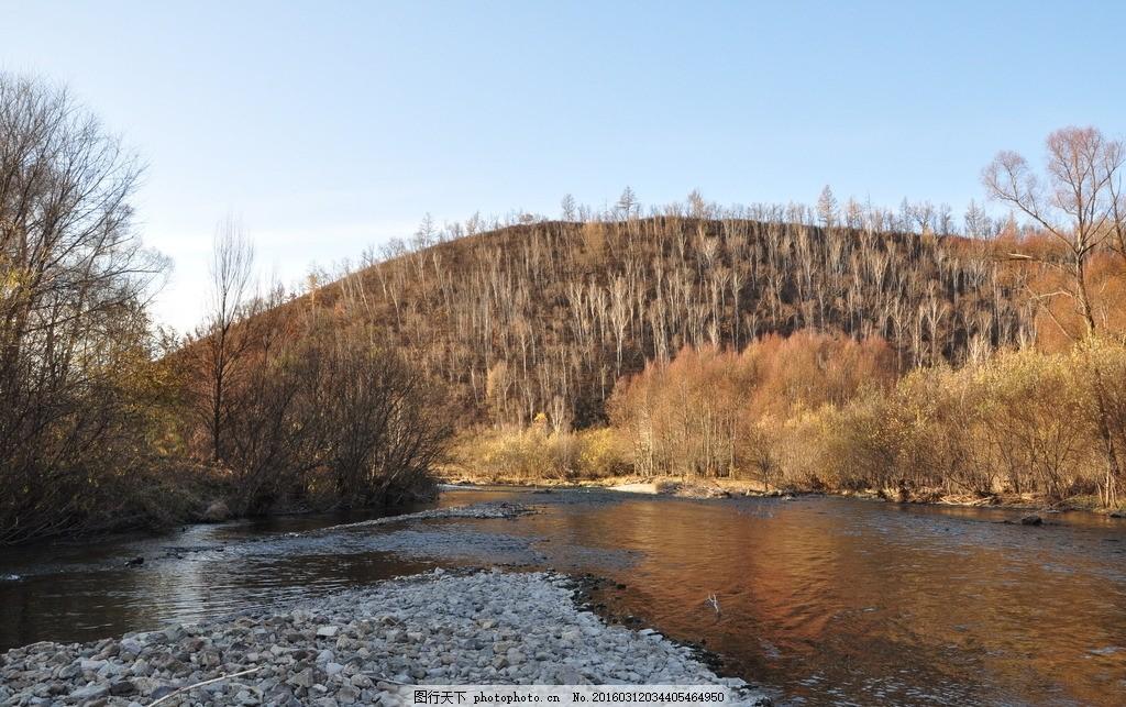 大兴安岭 林区 秋景 森林 秋色 树木 风景 美景 摄影 大兴安岭 摄影
