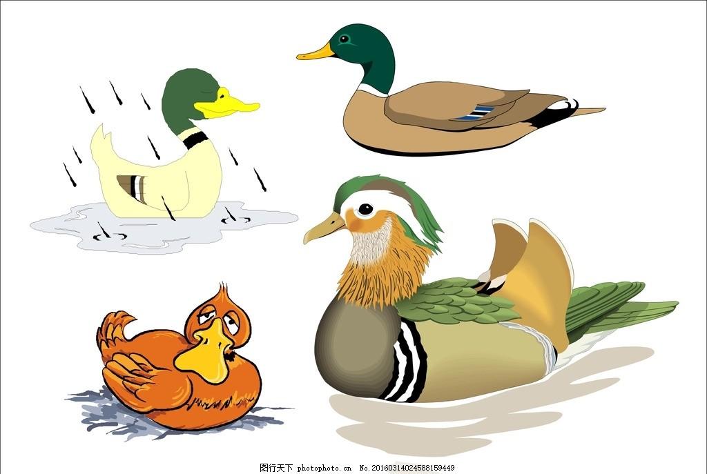 鸭 小鸭 小鸭子 大白鸭 小白鸭 水鸭 火鸭 鸭子 水鸭子 矢量鸭 白鸭