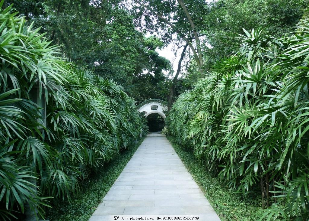中式园林拱门 中式 园林 林荫道 绿化 拱门 公园 园艺 环境 摄影 建筑