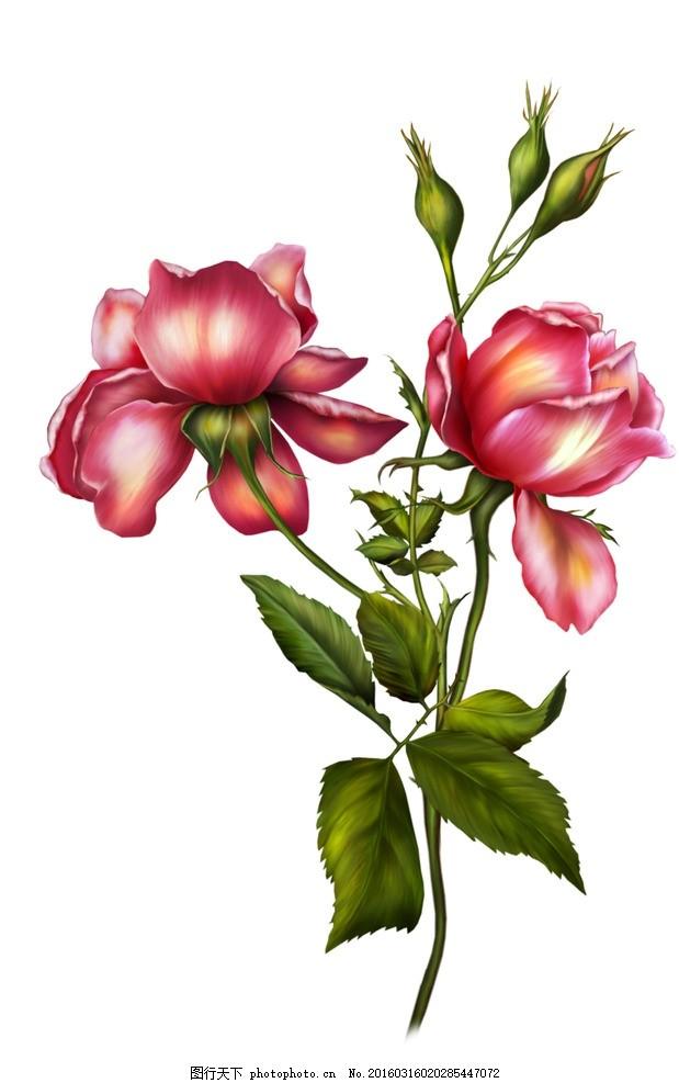 牡丹 图片下载 手绘牡丹 花卉 鲜花 手绘花纹 精美花纹 牡丹贴图