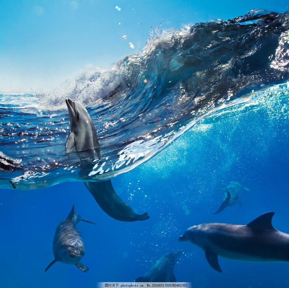唯美海豚 唯美 生物 动物 可爱 海豚 摄影 生物世界 海洋生物 300dpi